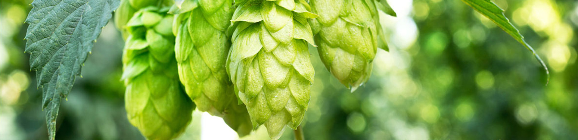 home_asaro_beer_ourbrewery5